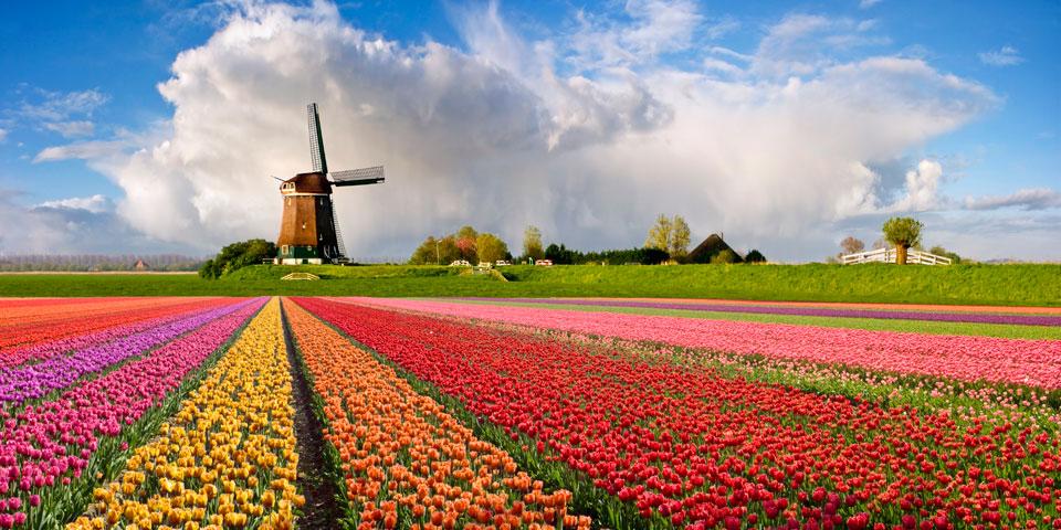 مزارع گل هلند